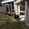 barbecue-2016-001